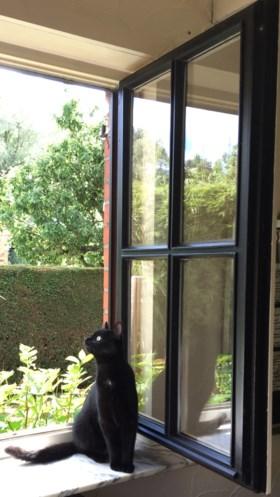 Al een jaar gezocht: Eddie, de populairste Vlaamse kat op Facebook