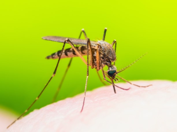 Waarom muggen een hekel hebben aan Deet