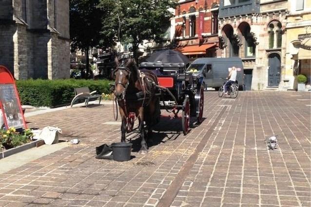 Gent verbiedt toeristische paardenkoetsen
