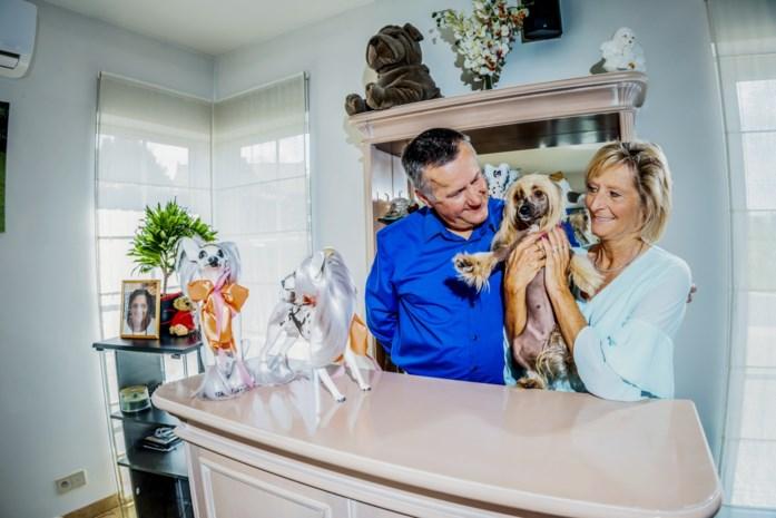 """Sonja en Johan hebben van naakthonden hun leven gemaakt: """"We zijn al twee jaar bezig met Pretty Lady. Nu kan ze Belgisch kampioen worden"""""""