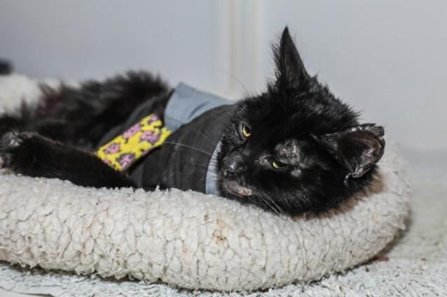 Mishandelaar van kitten Sprotje riskeert zes maanden cel