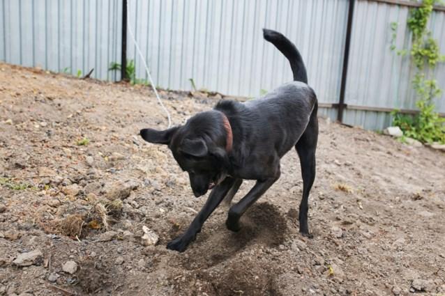 Hond met drie poten redt baby die levend begraven werd door tienermoeder (15)