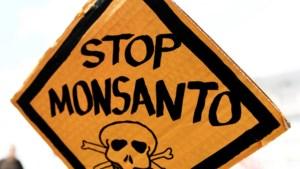 Schandaal rond biotechbedrijf Monsanto breidt uit
