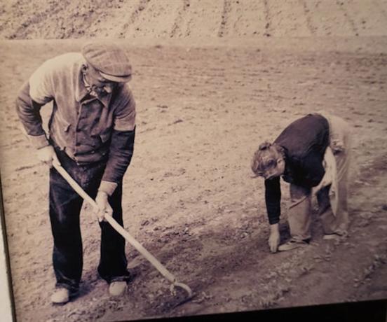 Verdwenen beroep in mei: bieten hakken en dunnen
