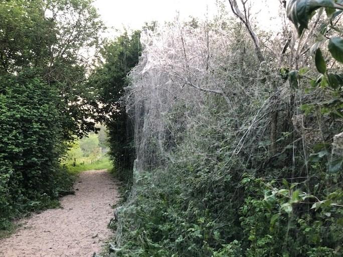 Reusachtig spinnenweb pakt boom helemaal in