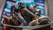 """Eerste Zeeuwse mosselen geoogst: """"Lekker mals en zilt"""""""