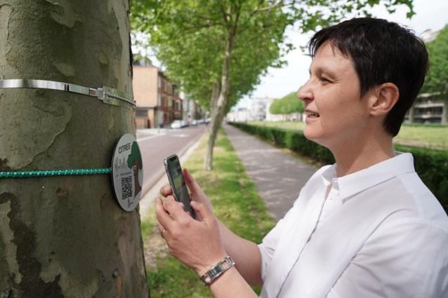 Zijn de Gentse bomen gezond? Scan een boom en help de wetenschap
