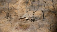 Botswana laat olifantenjacht opnieuw toe