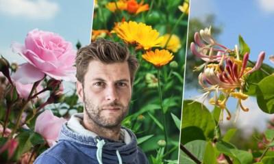Bartel Van Riet kiest de lekkerst ruikende planten voor in je tuin