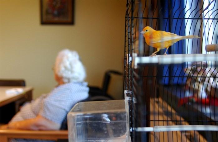 """Kwart van de senioren kan OCMW-rusthuis niet betalen en toch gaat prijs omhoog: """"We kunnen niet anders"""""""