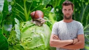 Daar zijn de slakken weer: Bartel Van Riet geeft tips om ze uit je tuin te houden
