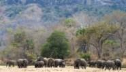 Olifanten vertrappelen twee mensen in Botswana: debat over jacht flakkert terug op