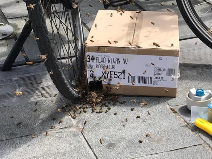Duizenden bijen nestelen zich in Kortrijkse fietsen