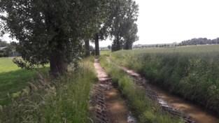 Bomen moeten  weg op Soldatenveld en aan Billekensweg