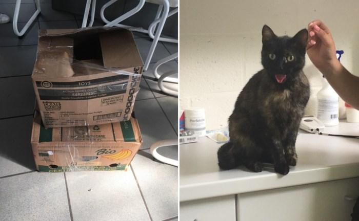 """Man steekt katten in dichtgeplakte dozen en vervoert hen in snikhete auto: """"Totaal onverantwoord"""""""