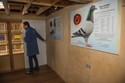 Als duivenmelken vooral duivenfrauderen wordt: bond kondigt extra controles aan na nieuw schandaal met prijsbeest