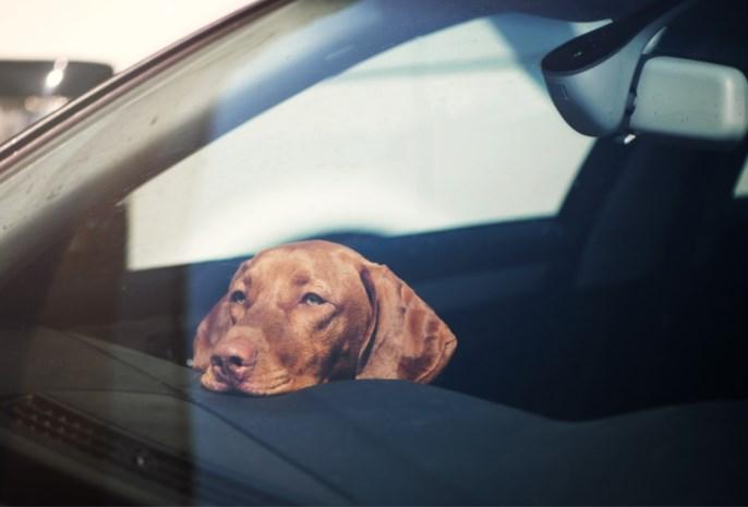 Is twee minuten in een warme auto al fataal voor een hond?