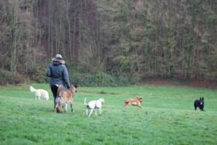 """Hondenzones in parken stuiten op verzet bij baasjes: """"Vrijheid van onze viervoeter wordt ingeperkt"""""""