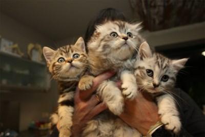 """Dierenasielen kunnen toestroom amper nog aan: """"Voor elk katje dat vertrekt, komen er vier bij"""""""