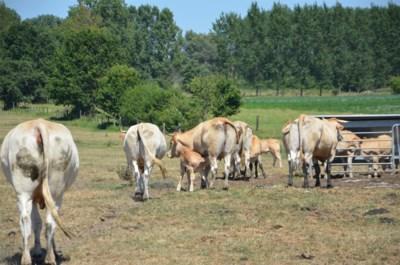 """Hitte speelt vooral boeren parten: """"Koeien krijgen al winterrantsoen en aardappelen willen niet meer groeien. Dat is heel slecht voor onze portemonnee"""""""