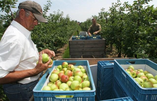 Fruitplukkers gaan door hitte al om 4 uur 's ochtends aan de slag