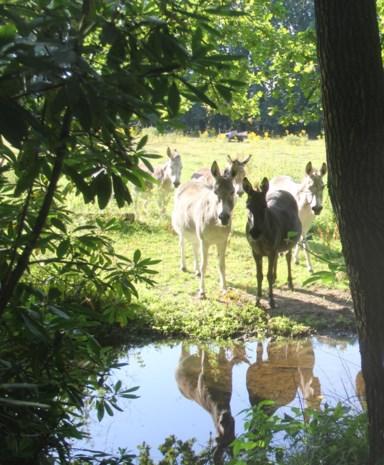 """Beek staat al tien dagen kurkdroog, maar hitte is niet de oorzaak: """"De ezels stonden elke dag uren te wachten op water"""""""