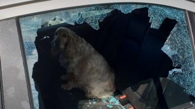 Opstootje nadat omstanders raam stukslaan om hond uit snikhete wagen te bevrijden: redders riskeren op te draaien voor kosten
