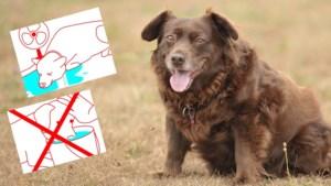 Hoe herken je een zonnesteek bij je hond? En hoe dien je zelf de eerste zorgen toe?
