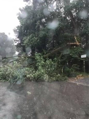 Onweer trekt over het land: windhoos veroorzaakt zware schade in Bree