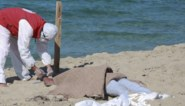 Al 66 lichamen geborgen na schipbreuk voor Libische kust