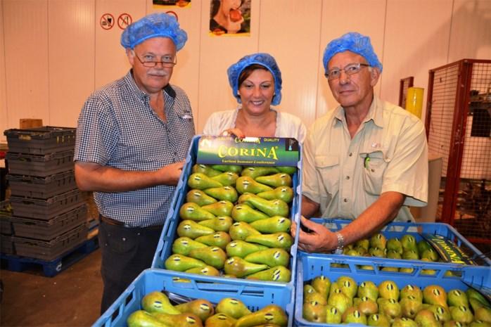 Plagiaat in de perensector: bijna 4.000 perenbomen moeten gerooid worden na inbreuk op kwekersrecht