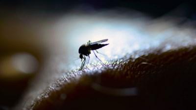 Helpt een lamp met blauw licht tegen muggen of is dat weggegooid geld?