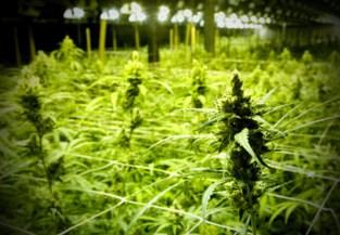 Jarenlange celstraffen voor zes Antwerpse cannabisplantages