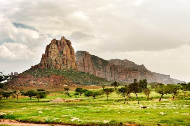 Ethiopië plant 353 miljoen bomen in 12 uur, en het einddoel is nog miljarden meer