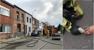 Brandweer redt bijzondere 'bewoner' uit brand