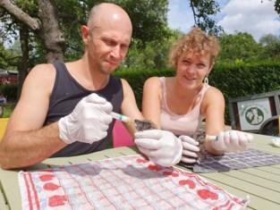 Dierenopvangcentrum Merelbeke stevent af op recordaantal binnengebrachte egels