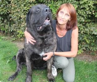 """Loslopende hond richt drama aan: """"Onze prijshond Nembo is verminkt"""""""