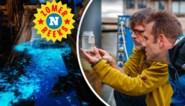 """Onze man zocht en vond het noorderlicht van de Noordzee: """"Het lijkt op een olievlek, tot er beweging in komt, dan doen die miljoenen eencellige zeevonkjes iets prachtig"""""""