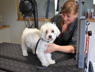 Leen trimt honden alleen met diervriendelijke producten