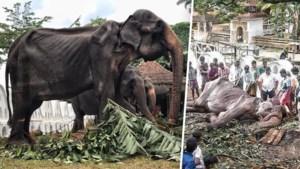 Na hevig protest: uitgemergelde olifant moet niet meer meelopen in festival