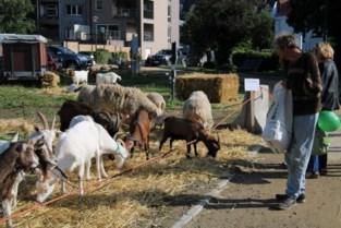 Wemmelse jaarmarkt feestelijk geopend