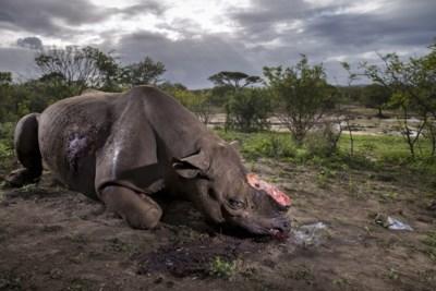 De jacht op de zwarte neushoorn is weer geopend en dat is niet per se een slechte zaak