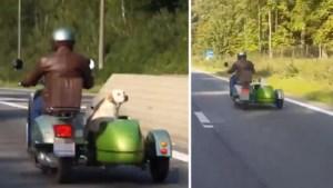 Labrador rijdt mee in zijspan op Brusselse ring. Maar mag dat wel?