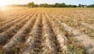Klimaatopwarming zal Limburg hardst treffen