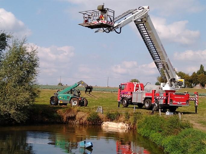 Brandweer redt hitsige dekstier uit vijver in Aarsele