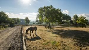 De zorgwekkende 'verpaarding' van Vlaanderen: te veel boerderijen worden villa's