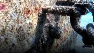 Een meester in vermomming: zie jij welk dier zich hier verstopt?