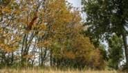 """Waarom de herfst voor weerkundigen vandaag al begonnen is: """"De herfst is nog nooit begonnen op 21 september"""""""