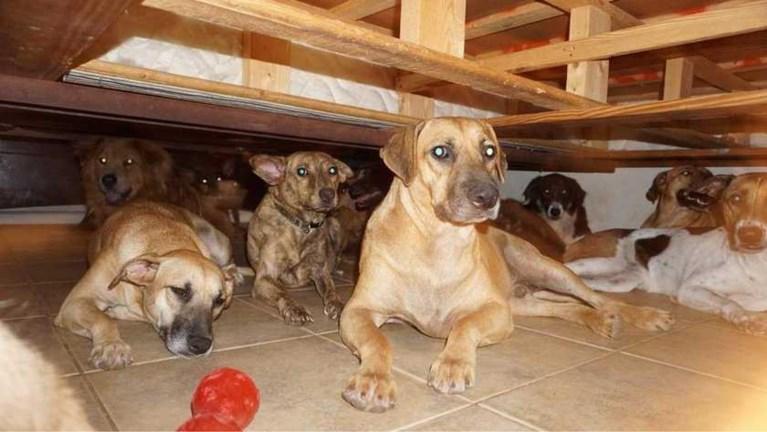 """Bahamaanse vrouw vangt 97 (!) honden op na doortocht van orkaan Dorian: """"Gelukkig respecteren ze mijn bed"""""""