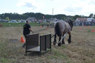 Demonstratie trekpaarden uitgesteld